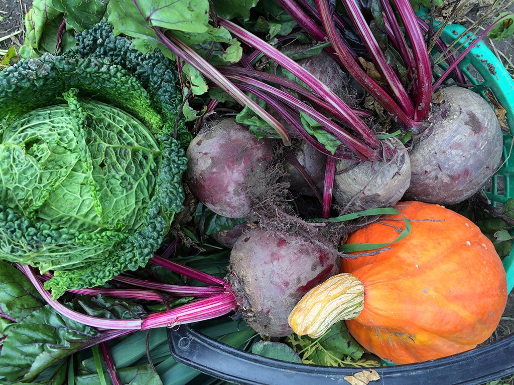 Våre grønnsaker