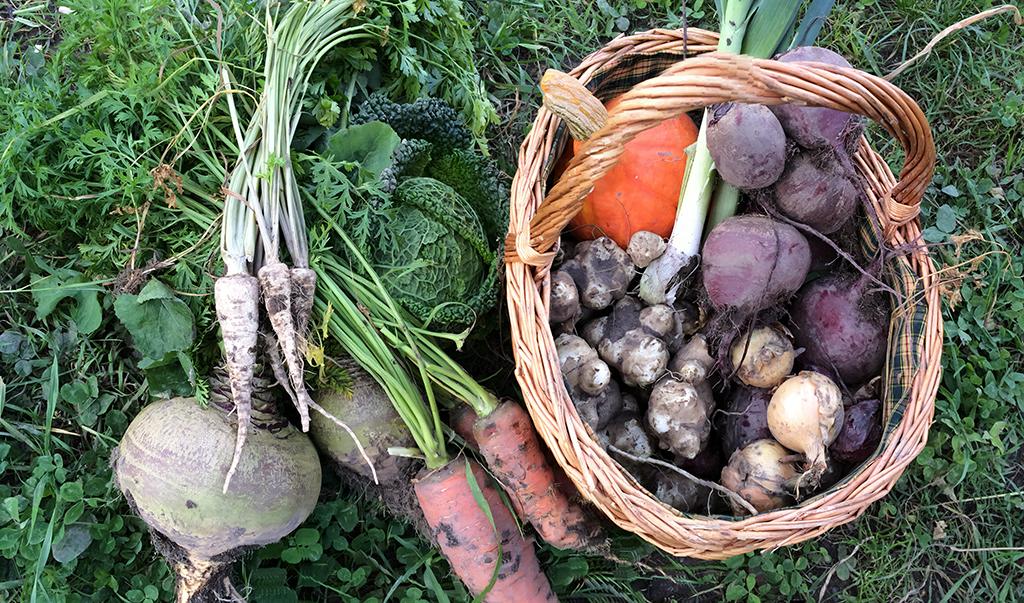 Økologisk andelslandbruk